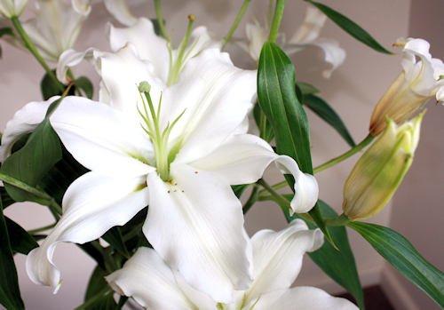 The lillies at Bien-etre
